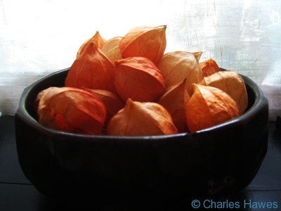 Physalis  in a bowl